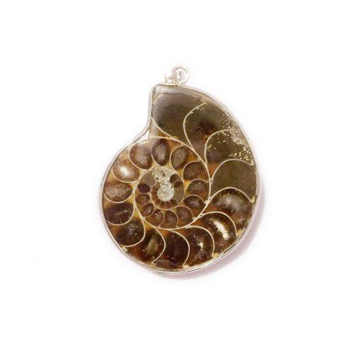 Natural Color Spiral Necklace Fossil Pendant Spot Color Conch Necklace Wholesale HYue-032